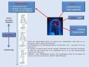 Informationsabend-Stoffwechselkur zur