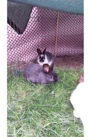 Junge Kaninchen zum