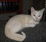 junge Katze Audry (*