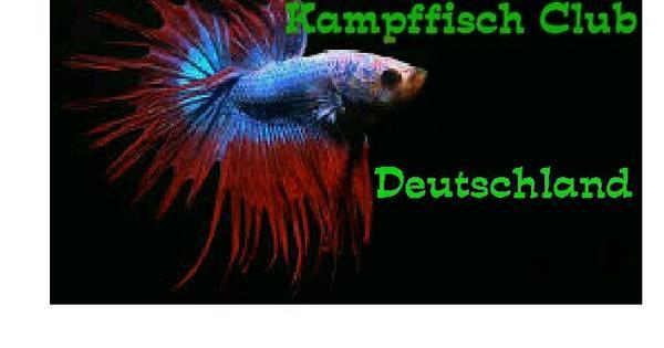 kampffisch club brd in regensburg fische aquaristik kaufen und verkaufen ber private. Black Bedroom Furniture Sets. Home Design Ideas