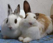 Kaninchen verschenken?