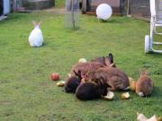 Kaninchen zu vermitteln***