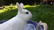 Kaninchen/ Zwergkaninchen