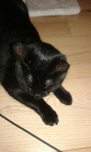 katzen verschenken in burscheid tiermarkt tiere kaufen. Black Bedroom Furniture Sets. Home Design Ideas