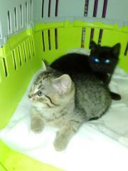 Katzen Kinder :)