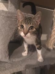 Katzenkinder suchen liebevolles