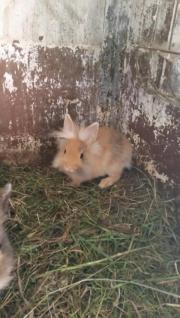 klein bleibende Kaninchen