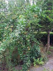 Kleingarten mit Steinlaube
