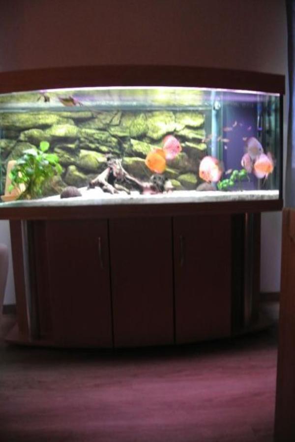 Komplett aquarium diskus 150x60x60 in pottum fische for Diskus aquarium