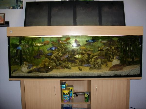 komplett aquarium in berlin fische aquaristik kaufen. Black Bedroom Furniture Sets. Home Design Ideas