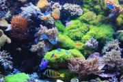 Korallen auf Riffgestein