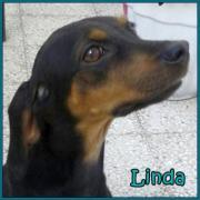 Linda - lebensfroher, verspielter