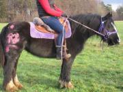 Mandy -Familientinker -Freizeitpferd