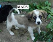 Mary, 4 Monate,