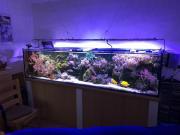 Meerwasser Aquarium 250cm x 60cm x 60cm nur komplett Aquaristik: Aquarium. Verkaufe Meerwasser-Aquarium 250cm x 60cm x 60cm mit Unterbau, Technikbecken, LED-Beleuchtung, HQI-Beleuchtung, IKS-Steuerung, ... 5.000,- D-90427Nürnberg Lohe Heute, 11:50 Uhr, Nü - Meerwasser Aquarium 250cm x 60cm x 60cm nur komplett Aquaristik: Aquarium. Verkaufe Meerwasser-Aquarium 250cm x 60cm x 60cm mit Unterbau, Technikbecken, LED-Beleuchtung, HQI-Beleuchtung, IKS-Steuerung
