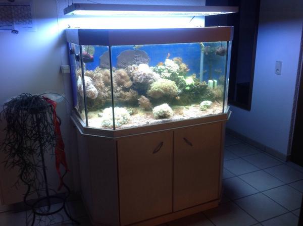 meerwasser aquarium in altach fische aquaristik kaufen. Black Bedroom Furniture Sets. Home Design Ideas