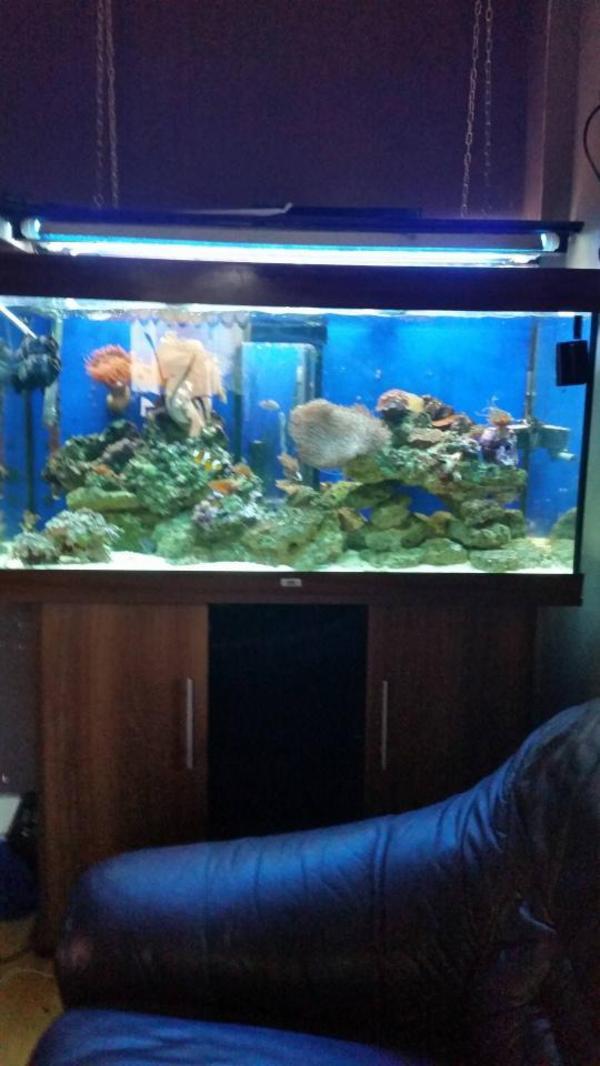 meerwasser aquarium komplett in tawern fische aquaristik kaufen und verkaufen ber private. Black Bedroom Furniture Sets. Home Design Ideas