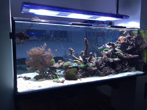 Salzwasser aquarium neu und gebraucht kaufen bei for Salzwasser aquarium