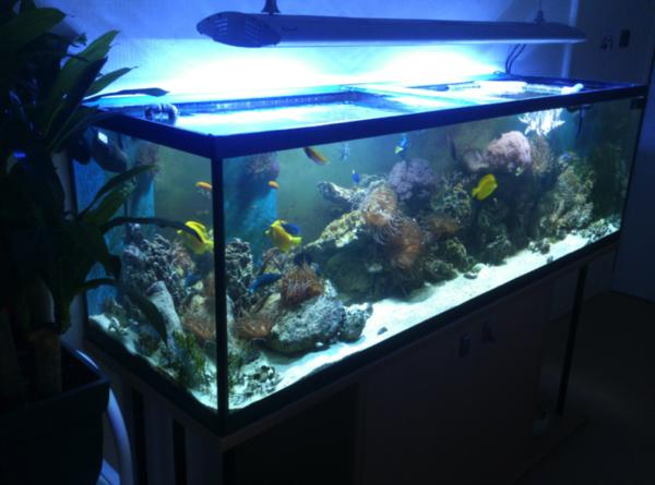 meerwasseraquarium 700 l komplett m technikbecken viele. Black Bedroom Furniture Sets. Home Design Ideas