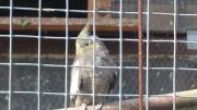 mehrere junge Vögel
