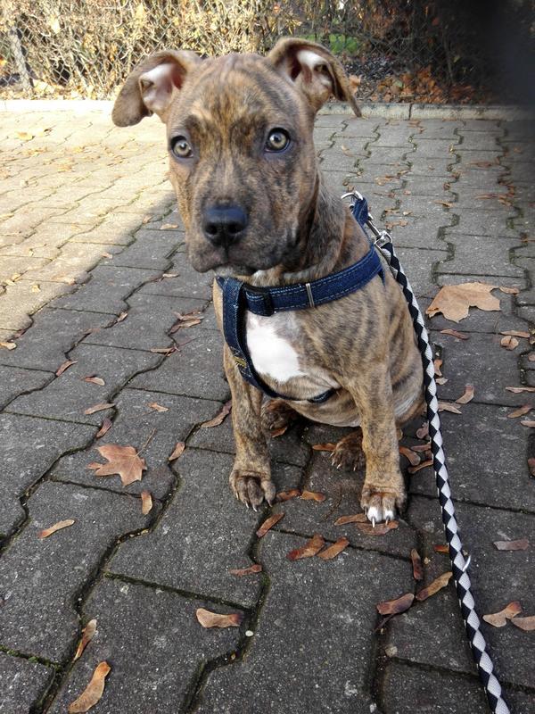 mischling welpe in berlin hunde kaufen und verkaufen