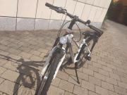 Mountainbike Bergamont 24