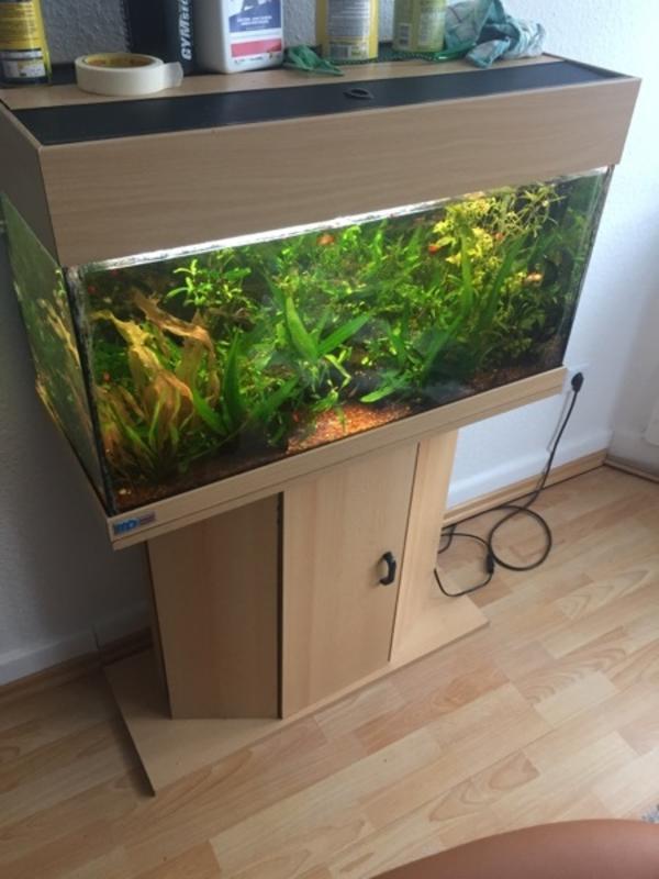 mp eheim aquarium 112l komplett set in iserlohn fische. Black Bedroom Furniture Sets. Home Design Ideas