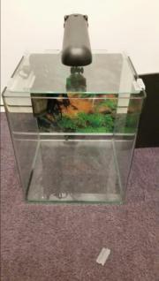 Nano Aquarium 30 Liter Dennerle Nano Aquarium mit 30 Litern 100% dicht incl. Dennerle Eckfilter, Lampe, Unterlage, ... 40,- D-82110Germering Heute, 08:43 Uhr, Germering - Nano Aquarium 30 Liter Dennerle Nano Aquarium mit 30 Litern 100% dicht incl. Dennerle Eckfilter, Lampe, Unterlage