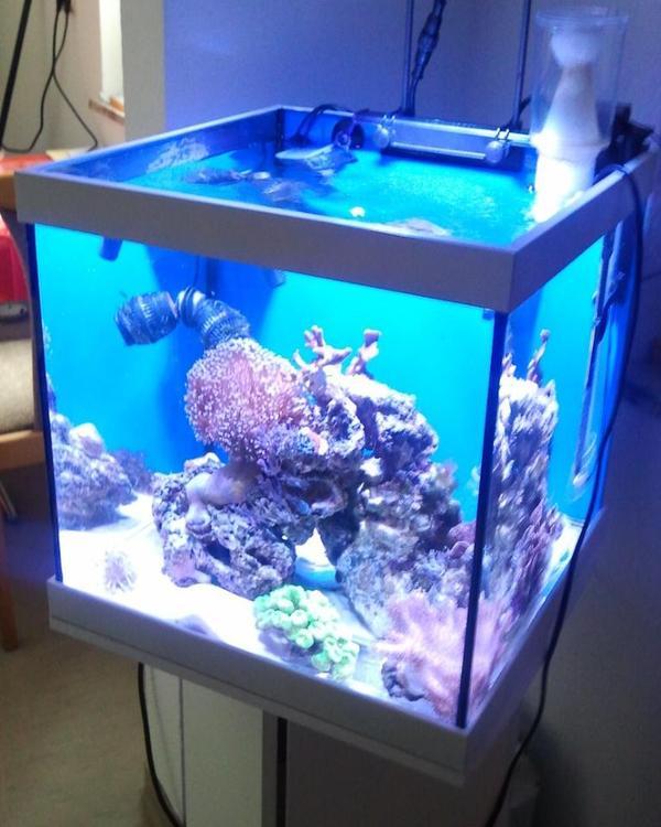 nano cube edels design neupreis 169 eur in mammendorf fische aquaristik kaufen und. Black Bedroom Furniture Sets. Home Design Ideas