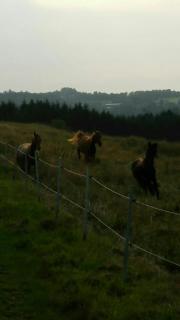 Noch eine Pferdebox