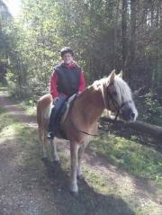 Pferde Stall Kurs