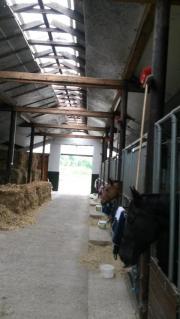 Pferdebox in kleiner