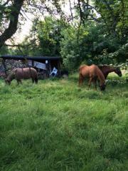 Pferdemist an Selbstabholer