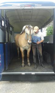Pferdetransport / Pferdetaxi