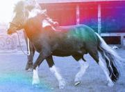 Ponyreiten und Unterricht