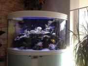 Premium Meerwasseraquarium ca.