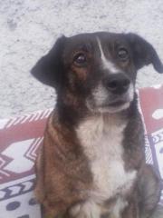 Roxy, unkomplizierter Familienhund