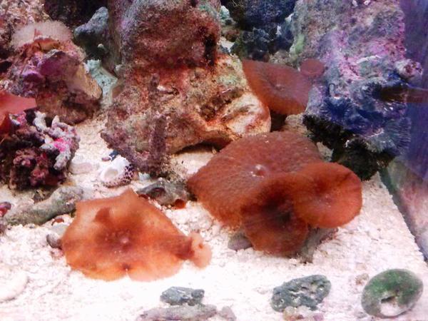 Salzwasser meerwasser annemonen zu verkaufen in vaihingen for Salzwasser aquarium fische