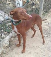Sancho - ein liebevoller