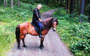 Seele von Pferd