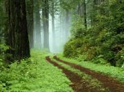 Su. Wald, Grün-