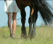 Suche Pferd-biete