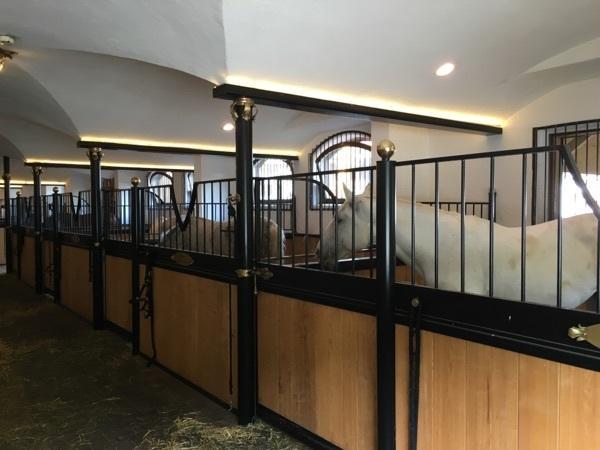 pferdemarkt in landshut isar kaufen bei deine. Black Bedroom Furniture Sets. Home Design Ideas