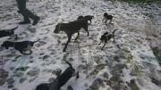 Süße Deutschdrahthaar-Beagle