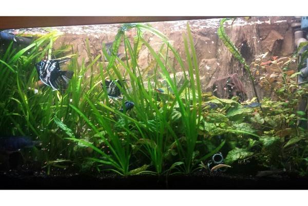 au enfilter verkaufen kleinanzeigen aquarium fische zubeh r deine. Black Bedroom Furniture Sets. Home Design Ideas