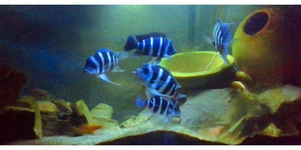 aquarium malawi  neu und gebraucht kaufen bei dhd24c