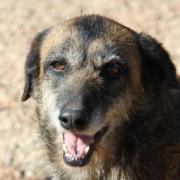 Tanja, Tierschutzhund aus