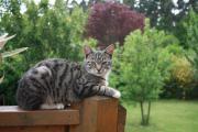 Tierbetreuung im Urlaub
