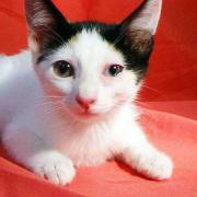 Tierschutz] - Katzenmädchen Lana
