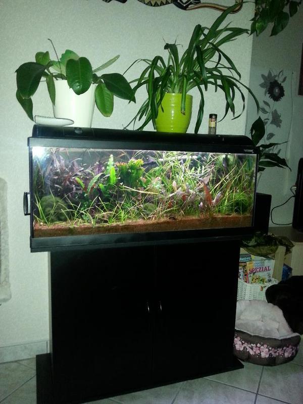 verkaufe aquarium in viernheim fische aquaristik kaufen. Black Bedroom Furniture Sets. Home Design Ideas